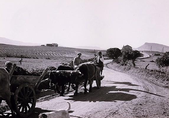 Momenti di vita quotidiana - il trasporto nei campi