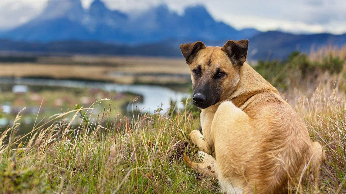 Adotta un cane - Informazioni | Comune di Poggio Rusco