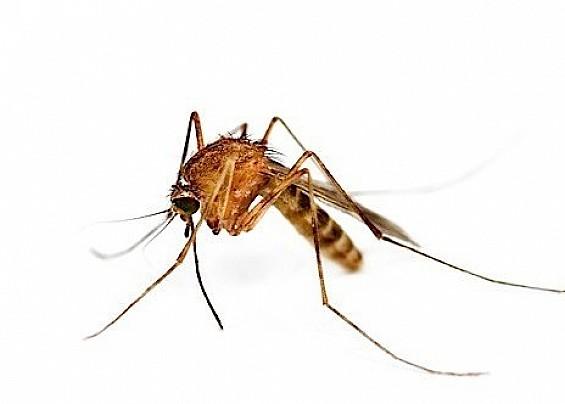 Suggerimenti per limitare la diffusione delle zanzare