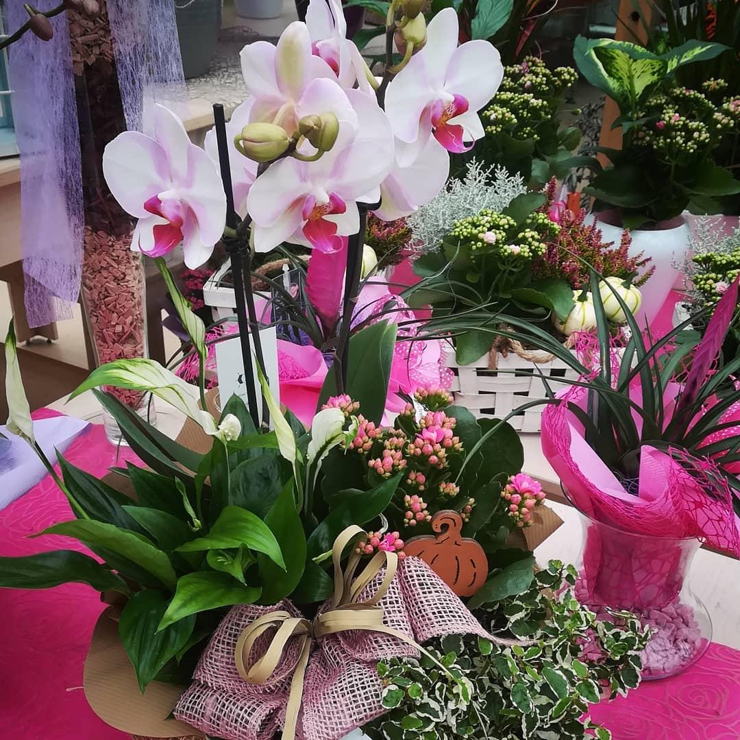 Immagini Piante E Fiori consentita la vendita al dettaglio di piante e fiori
