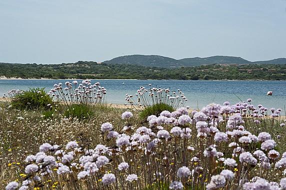 Costa Serena Macchia mediterranea