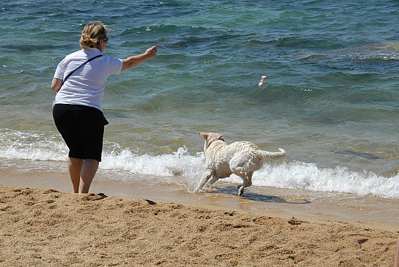 Bau Bau Beach Palau spiaggia cani 2
