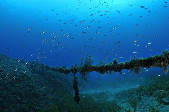 Palau diving